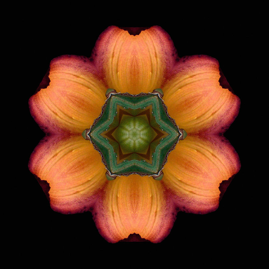 Orange Daylily Flower Mandala Photograph