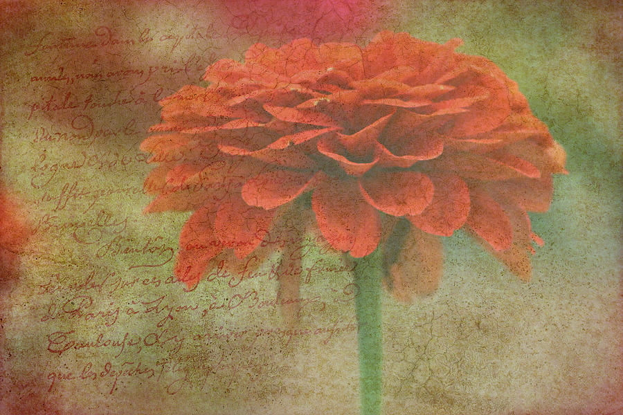 Orange Floral Fantasy Photograph