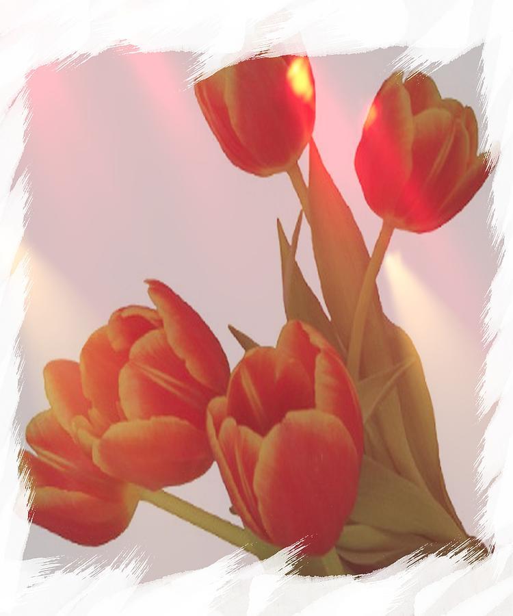 Tulips Photograph - Orange Light by Debra  Miller
