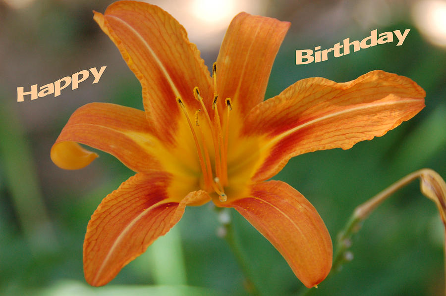 Orange Lily Birthday 1 Photograph  - Orange Lily Birthday 1 Fine Art Print