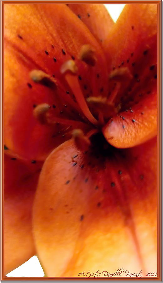 Orange Macro Modern Lily Photograph  - Orange Macro Modern Lily Fine Art Print