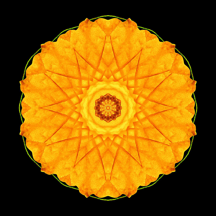Orange Nasturtium Flower Mandala Photograph