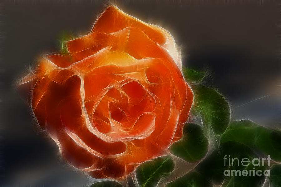 Orange Rose 6220-fractal Photograph