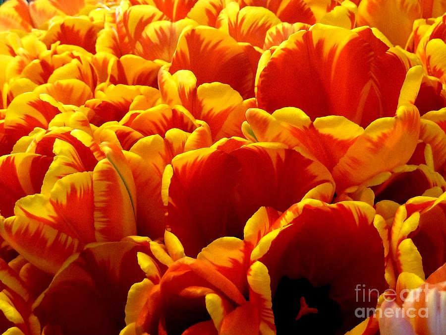 Orange Sea Photograph  - Orange Sea Fine Art Print