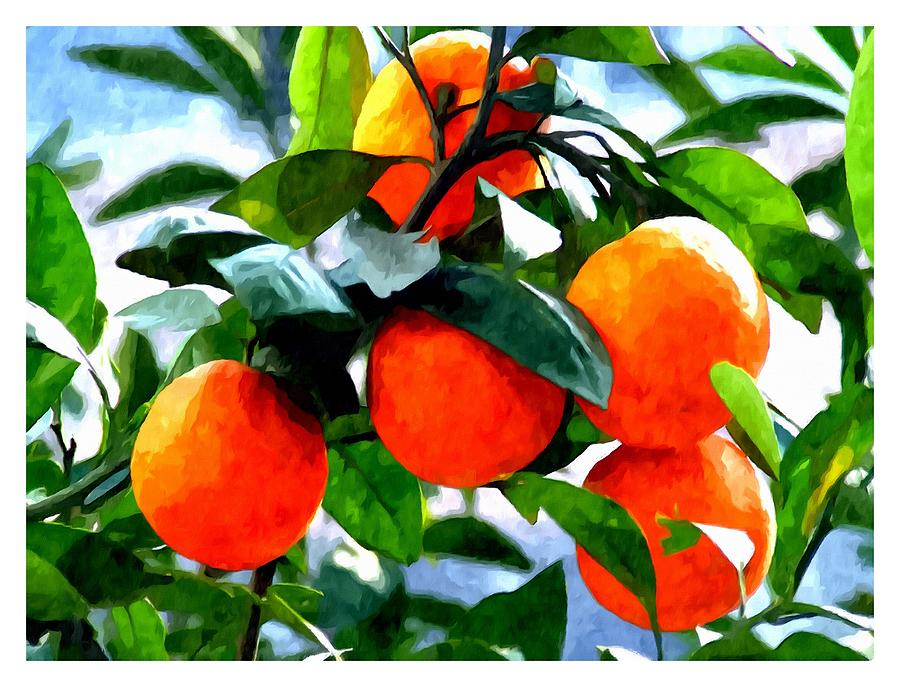 Agricultural Painting - Orange Tree In Springtime  by Lanjee Chee