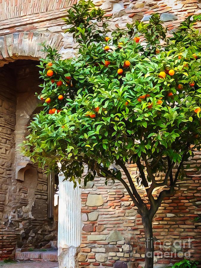 Orangetree Photograph