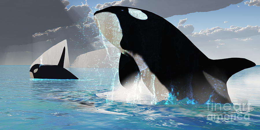 Orca Whales Painting