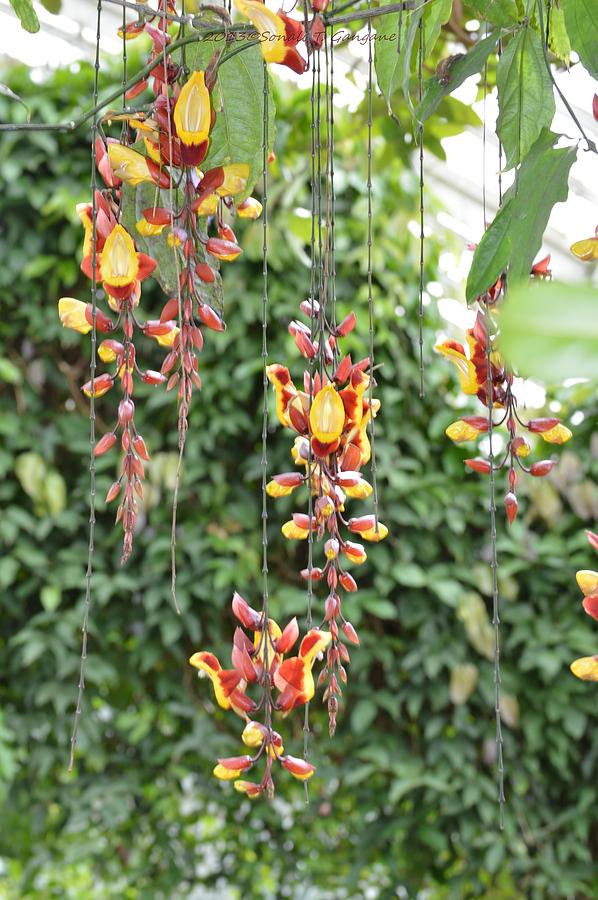 Orchid Falls Photograph
