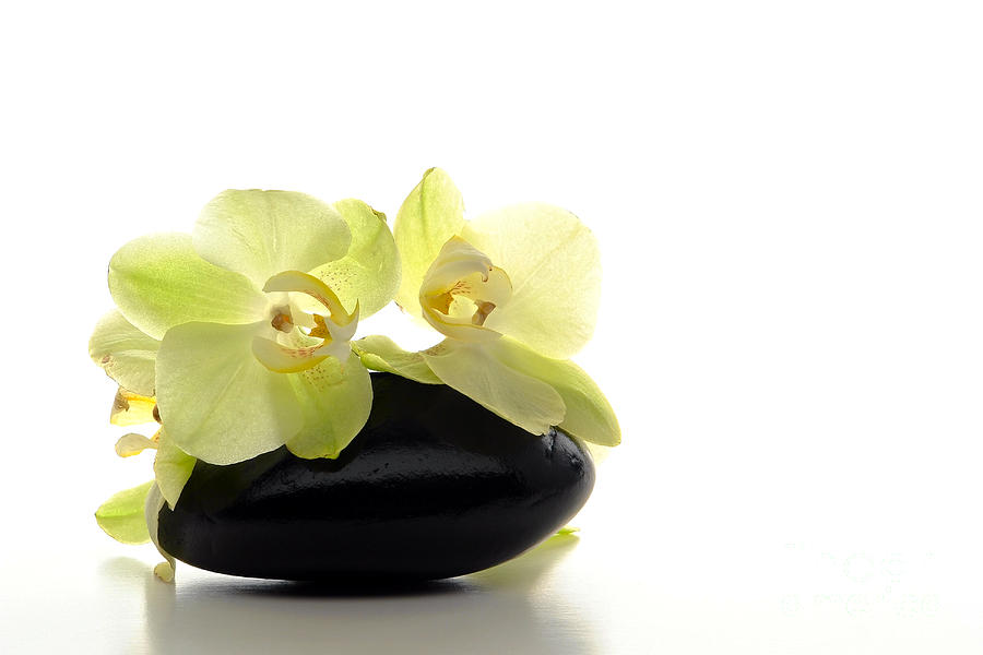 Orchid Flowers On Polished Stone Photograph