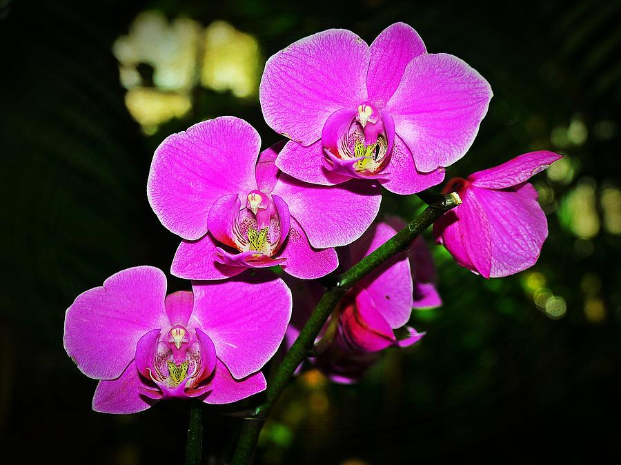 Background Photograph - Orchid Flutter by Liudmila Di