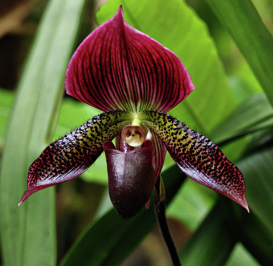 Orchid Photograph - Orchid by Sandy Keeton