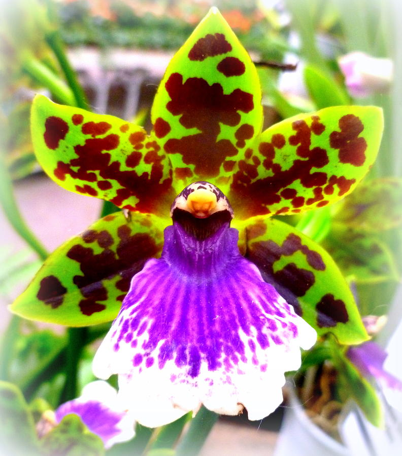 Orchid Photograph - Orchid by The Creative Minds Art and Photography