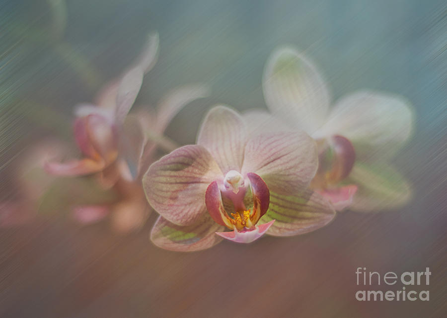 Orchids In The Mist Digital Art  - Orchids In The Mist Fine Art Print