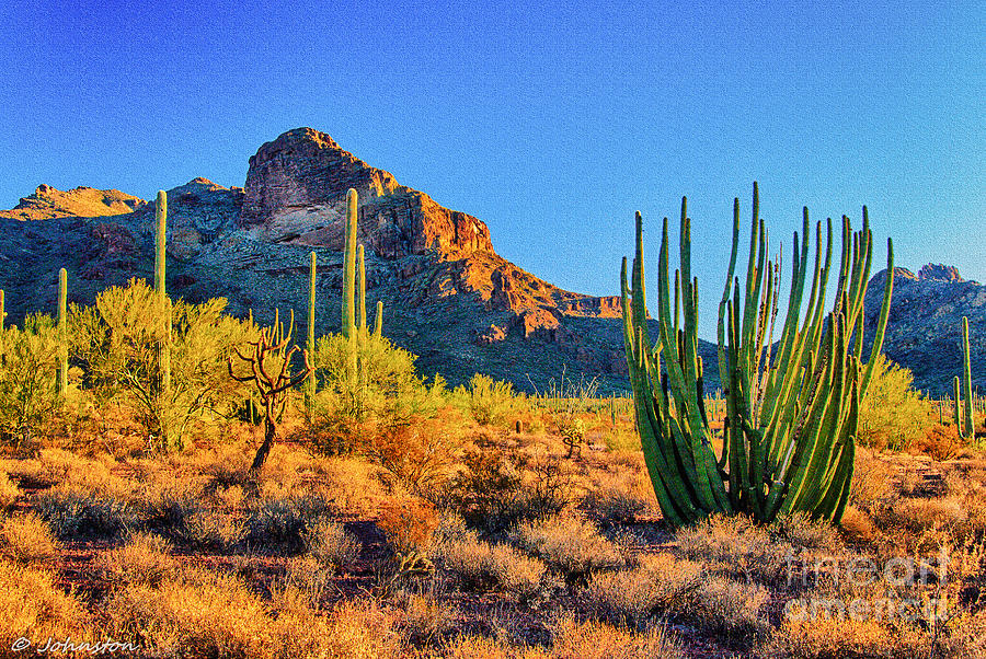 Organ Pipe Cactus National Monument Sunset Photograph  - Organ Pipe Cactus National Monument Sunset Fine Art Print