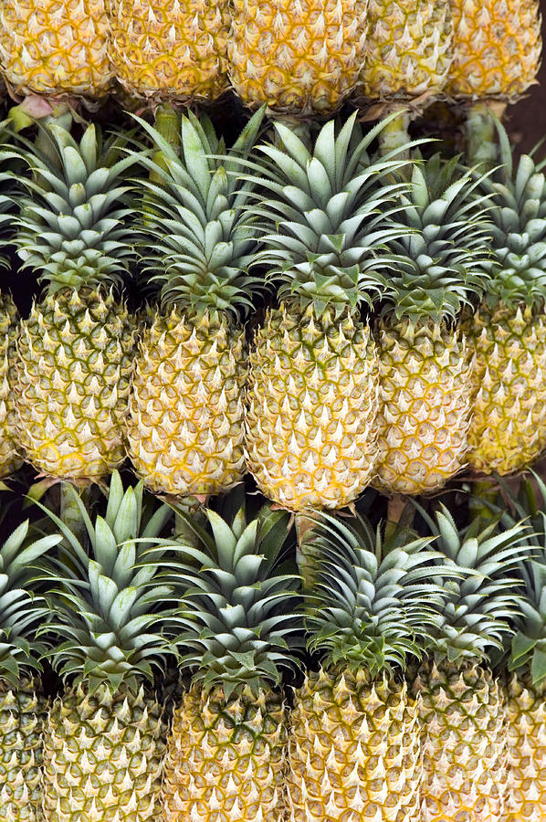 Agriculture Photograph - Organic Pineapple  by Kevin Miller
