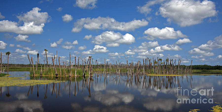 Orlando Wetlands Cloudscape 3 Photograph  - Orlando Wetlands Cloudscape 3 Fine Art Print