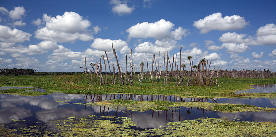 Orlando Photograph - Orlando Wetlands Cloudscape by Mike Reid