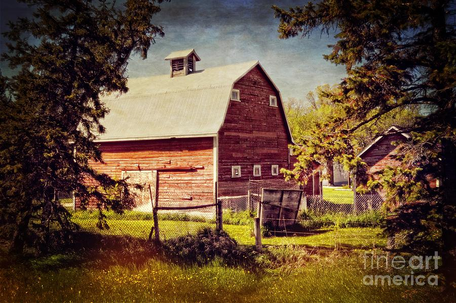 Out In The Country Photograph  - Out In The Country Fine Art Print