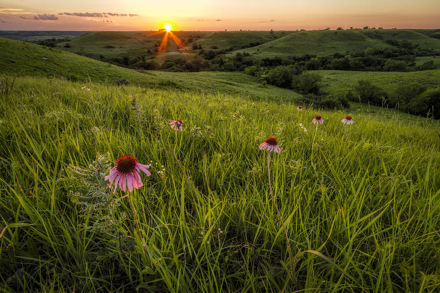 Out In The Flint Hills Photograph