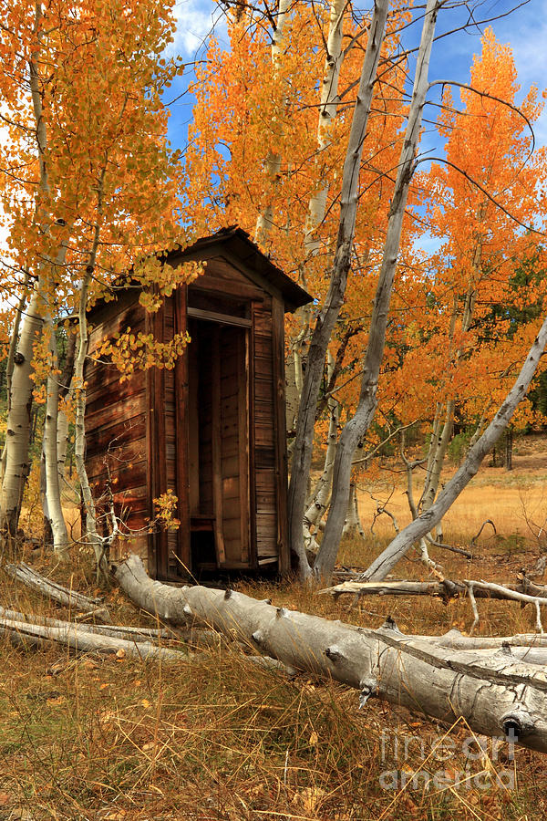 Outhouse In The Aspens Photograph