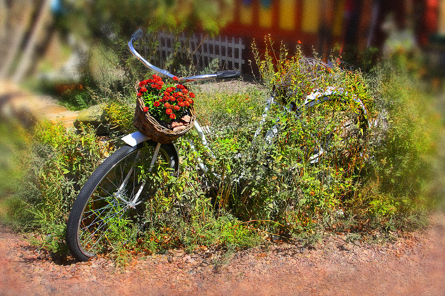 Overgrown Bicycle With Flowers Photograph