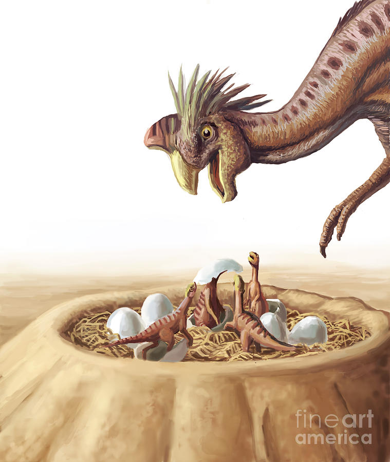 Oviraptor And Nest Photograph