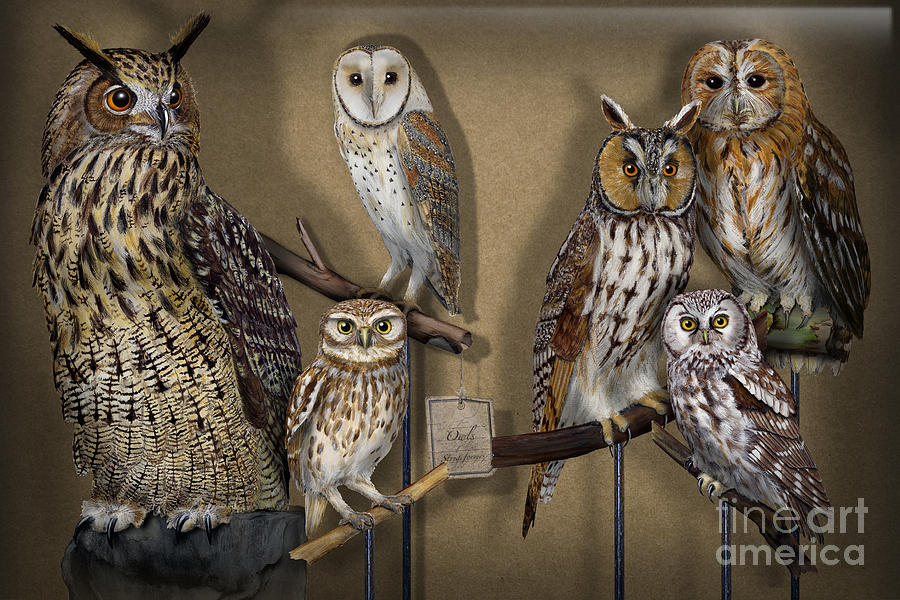 Owls - Show-case Collection - Chouettes - Hiboux - Lechuzas - Mochos - Strigiformes Strigidae Painting