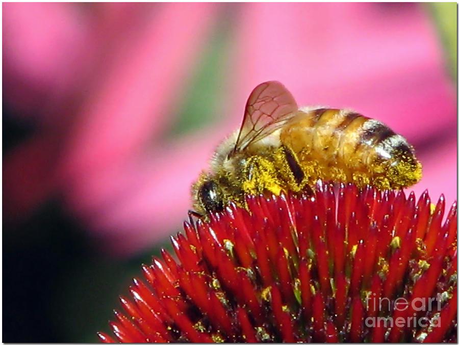 P2 The Pollenator Photograph