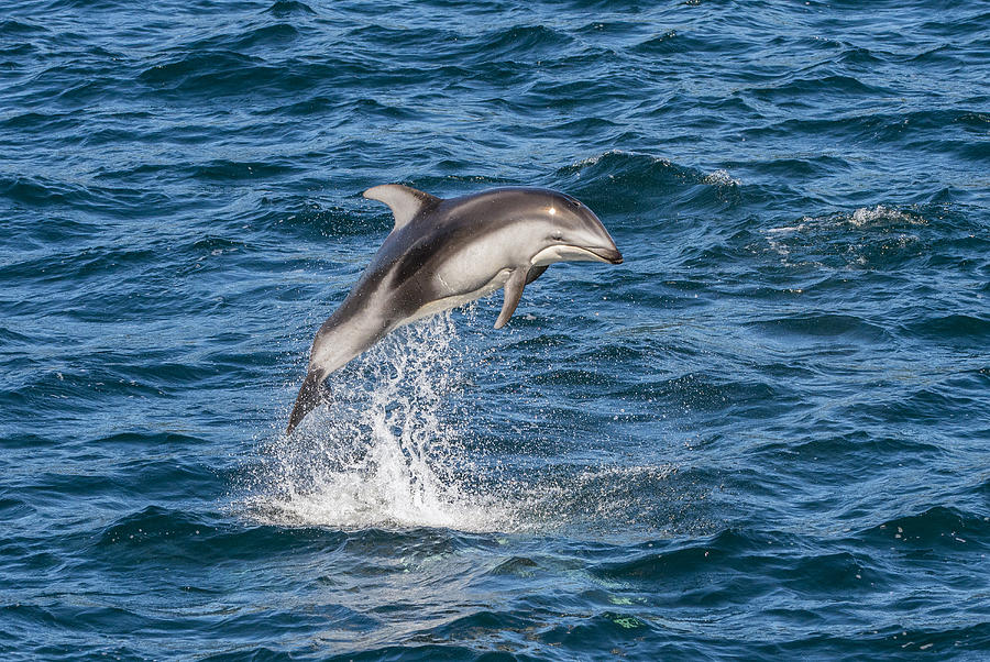 Endangered baby dolphin dies after swimmers pass it around