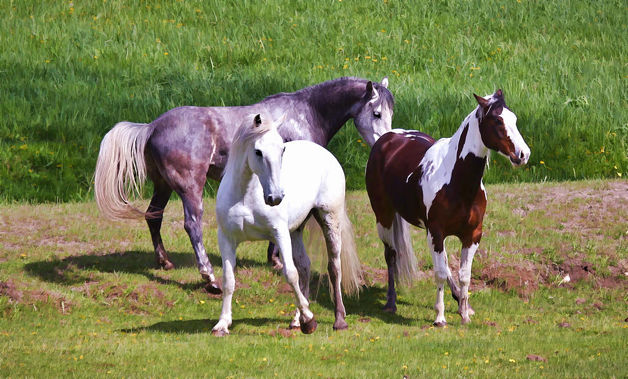 Painted Pretty Horses Photograph