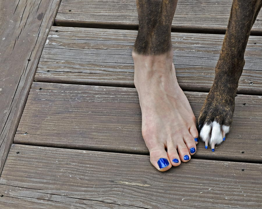 Painted Toenails And Dog Claws Digital Art  - Painted Toenails And Dog Claws Fine Art Print