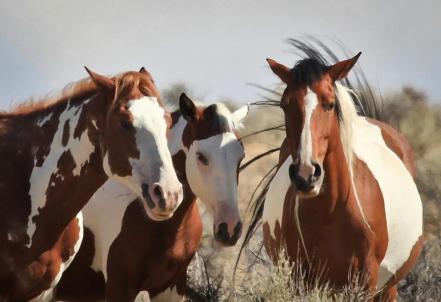 Horses Photograph - Painted Wild Horses by Athena Mckinzie