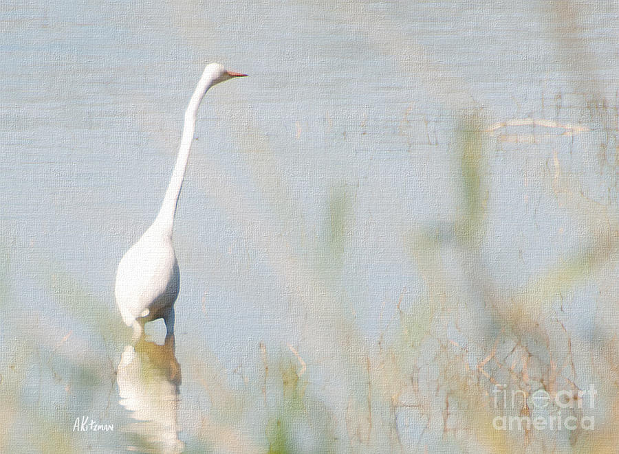 Painting of great white heron wading in the myakka river for White heron paint