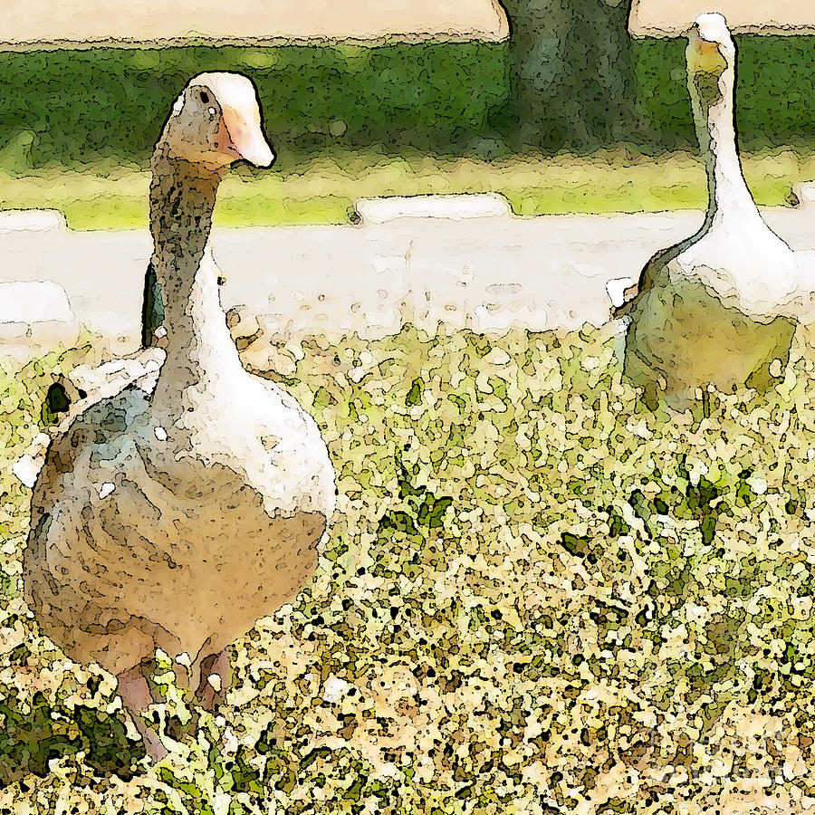 Pair Of Geese Photograph  - Pair Of Geese Fine Art Print