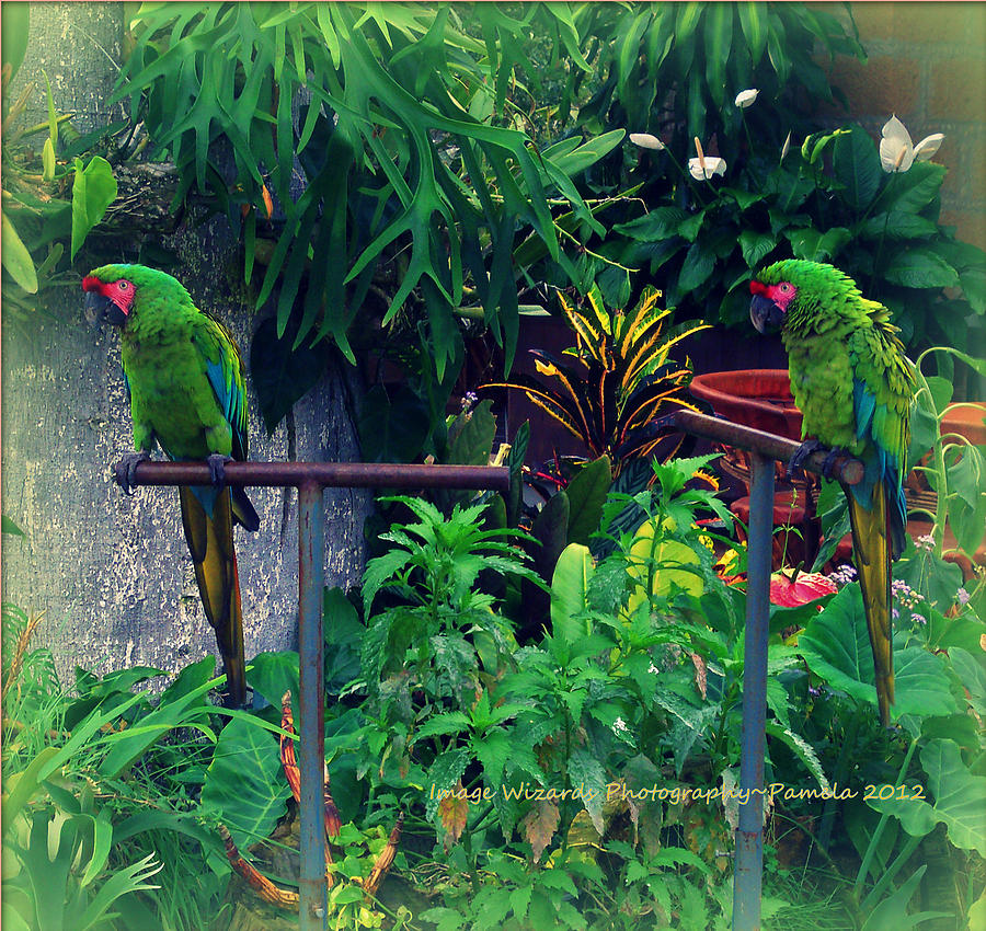 Paired Parrots In Paradise Photograph