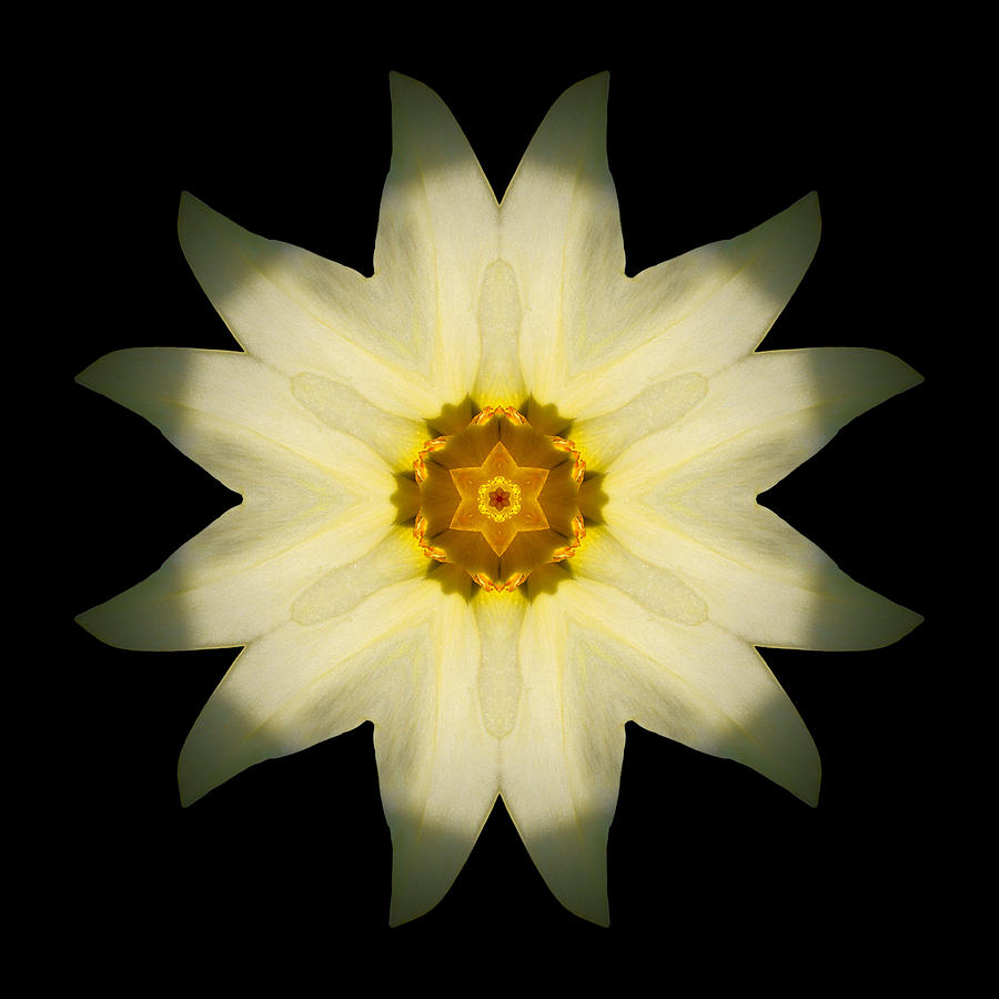 Pale Yellow Daffodil Flower Mandala Photograph