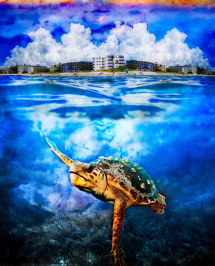 Clouds Photograph - Palm Beach Under And Over by Debra and Dave Vanderlaan