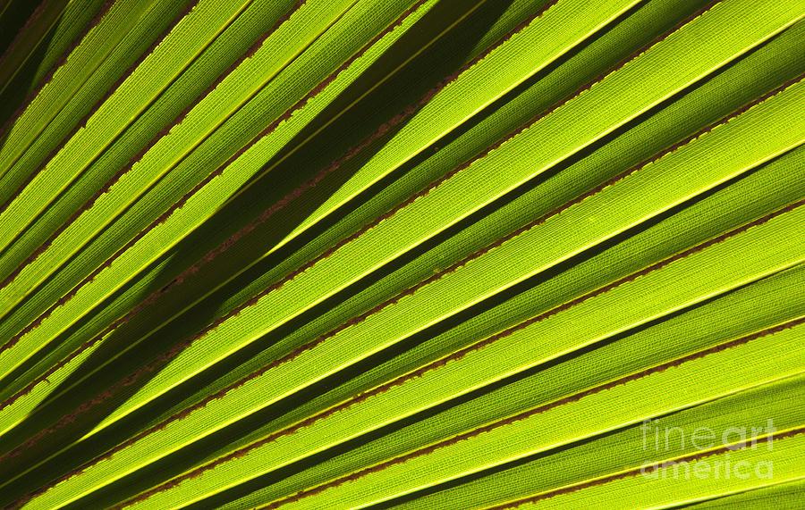Palm Lines Photograph