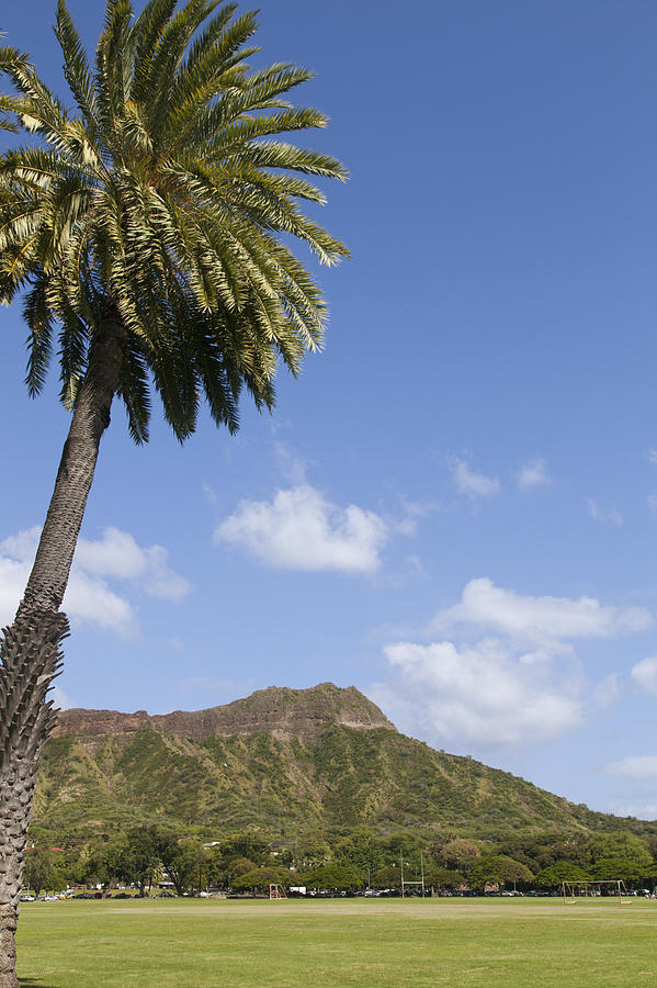 Palm Tree And Diamond Head Photograph