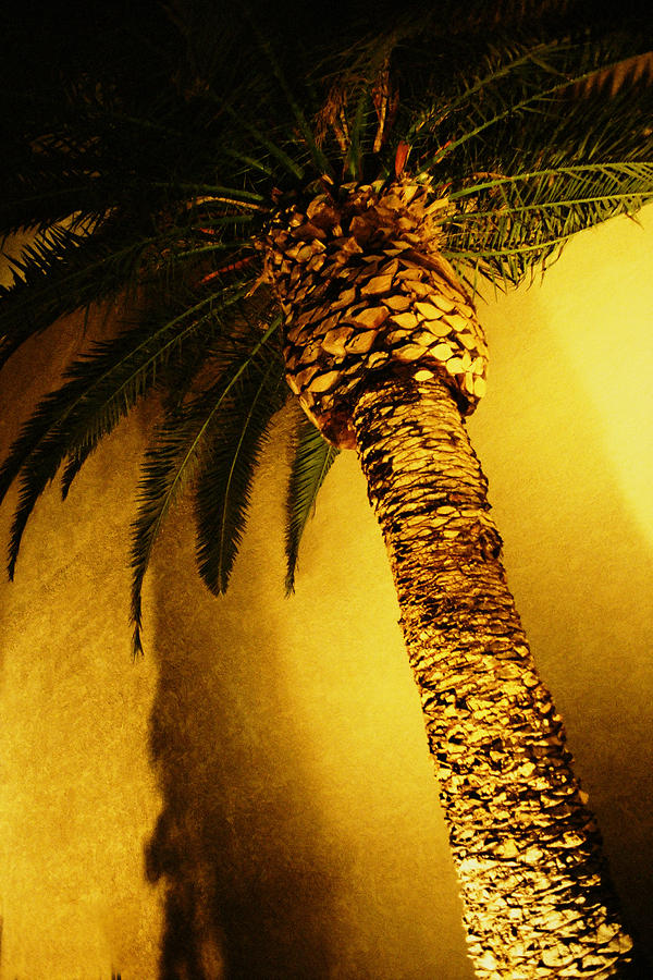 Palm Tree In Vegas. Photograph