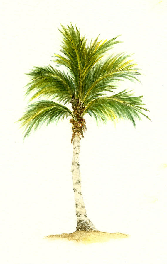 Palm Tree Number 3 Painting By Michael Vigliotti