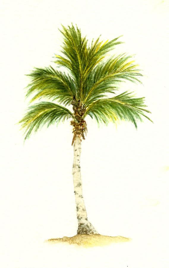 palm tree watercolor - photo #16