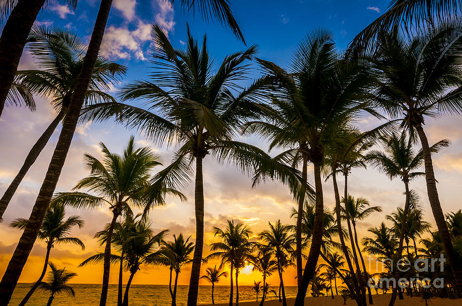 Palm Tree Sunrise By Tim Gartside
