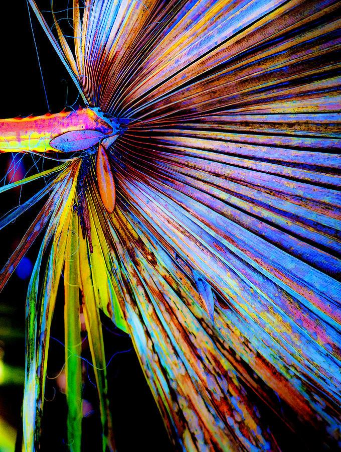 Palmetto Photograph - Palmetto Gone Wild by Stephen Anderson