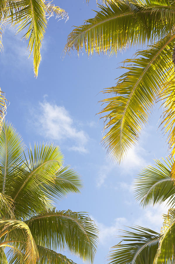 Palms And Sky Photograph