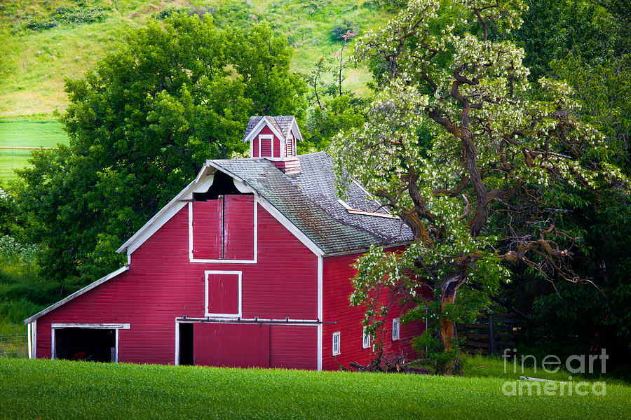 Palouse Barn Number 9 Photograph  - Palouse Barn Number 9 Fine Art Print