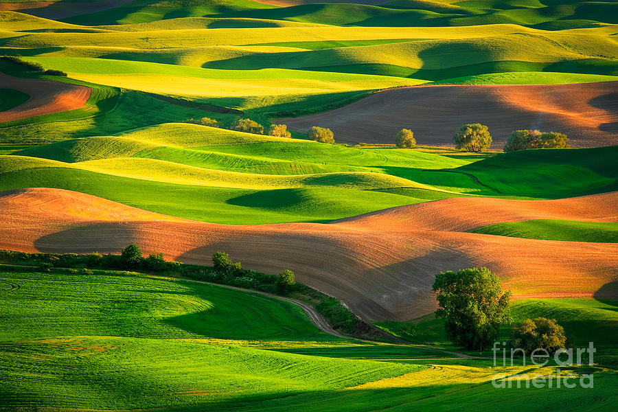 Palouse Fields Photograph