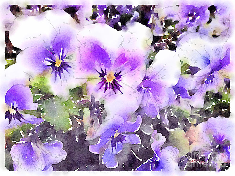Pansies Watercolor Painting