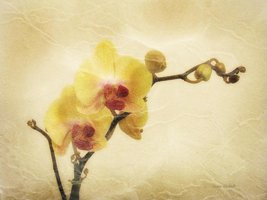 Paper Flowers Photograph