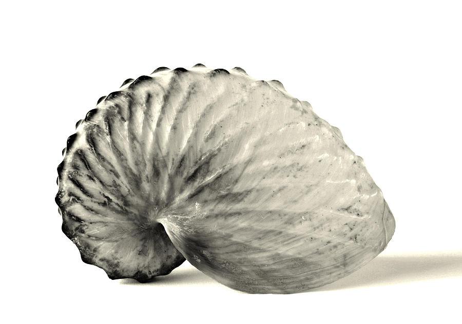 Shell Photograph - Pap...